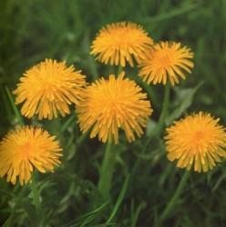 fiori_parco_005