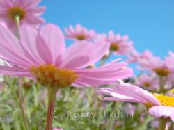 fiori-11