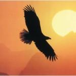 Aquila_tramonto_reverse