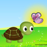tartaruga_farfalla