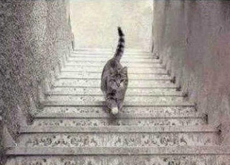 gatto-illusione-ottica2-1
