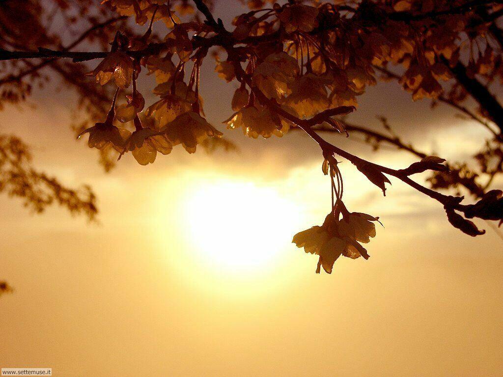 stagione_primavera_059