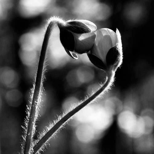 amore-bianco-e-nero-in-natura-il-pic3b9-vero