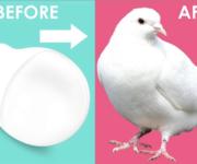 Creare una colomba da una lampadina