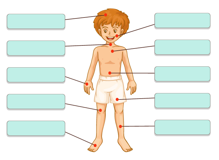 Le parti del corpo - Baby-flash